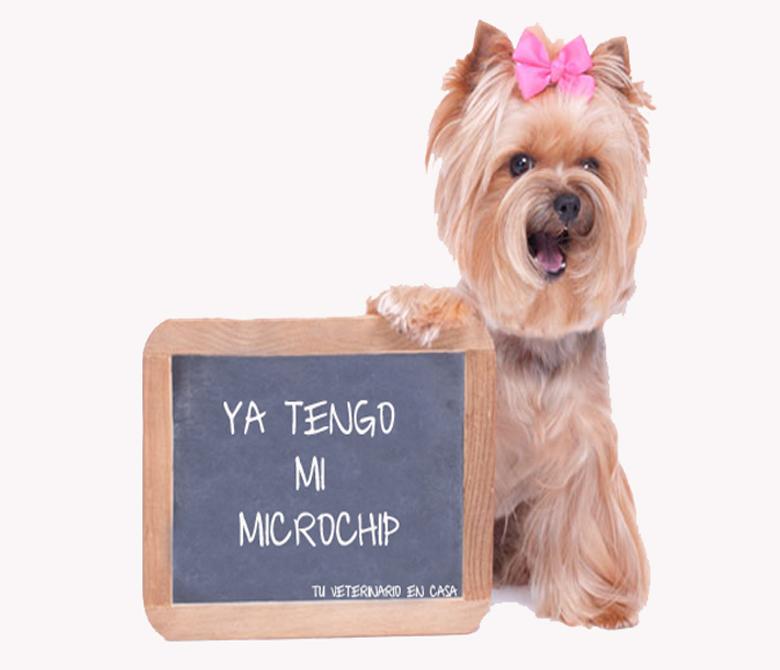microchip tu veterinario en casa
